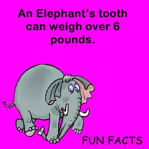 10 Dental Fun Facts